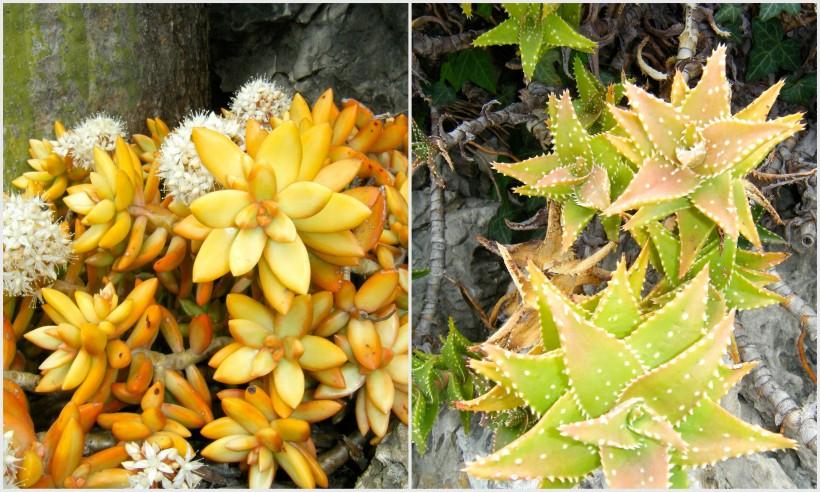fleurs exotiques jaunes