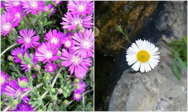 fleurs jardin botanique monaco