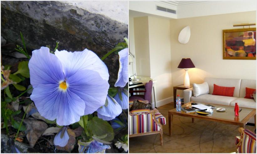 suite salon + fleurs